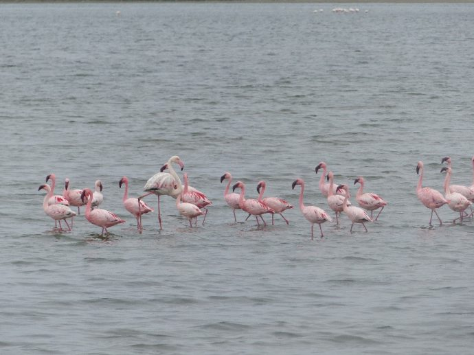 Flamants Roses en Namibie - Blog Meltour